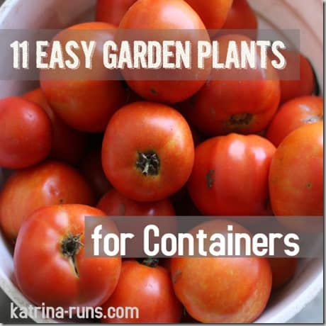 11 container plants