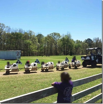 Tuscaloosa Barnyard cow train